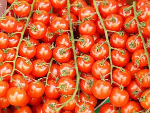 Make your organic vegetable garden a reality