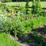 The Benefits of Organic Farming In Sustainable Agriculture