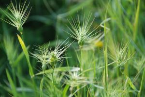 Try using organic weed control methods to control your weeds