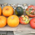 Essential Methods of Organic Farming