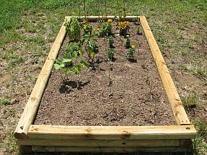 Raised-bed garden plots may be a good option if you have poor soil in your yard