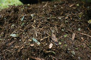 Organic compost is so important for your garden