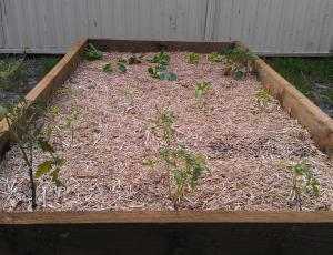 Raised bed gardening has many advantages