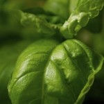How To Grow Garden Herbs: Tips For The Budding Chef