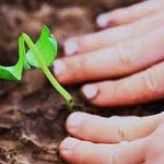 Home Gardening Tips For Newbies: When To Plant Vegetables