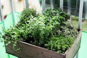 Don't think you can't have your own garden if you live in a unit. Growing herbs in a planter box can give you fresh herbs whenever you want