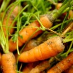 Is Growing Organic Carrots In Containers Feasible?