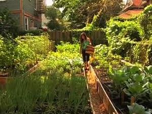 We aim to give you ideas on how to make your flower gardens, your veggie patch, or even your walkways weed-free.