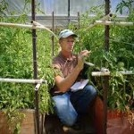 Making Your Own Simple And Effective Organic Weed Killer